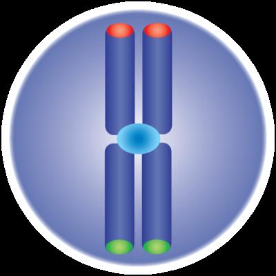 medgen-logo